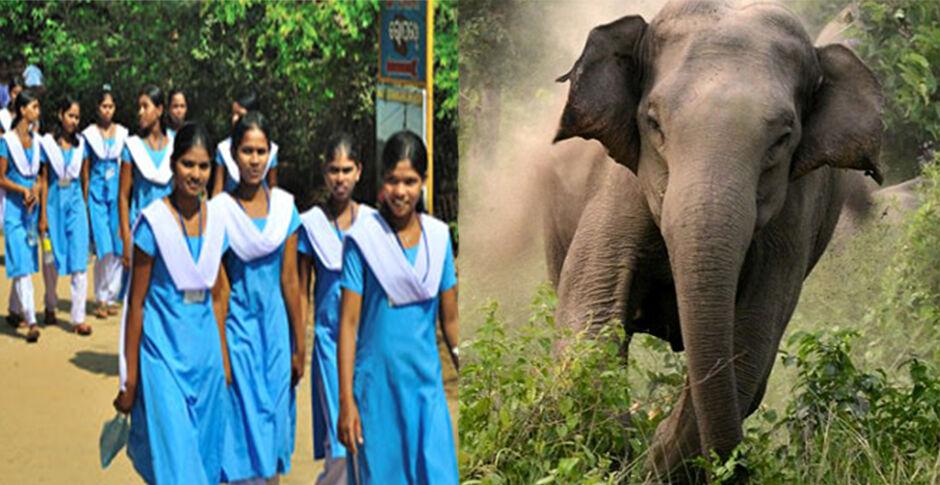 हाथियों के हमले से दो लोगों की मौत के बाद बंद किए गये ओड़िशा के 600 स्कूल