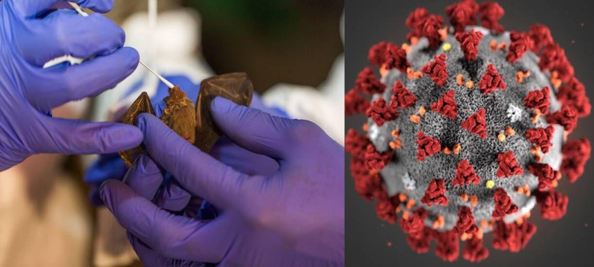 कोरोना से भी भयानक महामारियों वाले वायरस से जूझेगी दुनिया, शोध ने किया आगाह